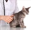 Ветеринарные клиники в Наурской